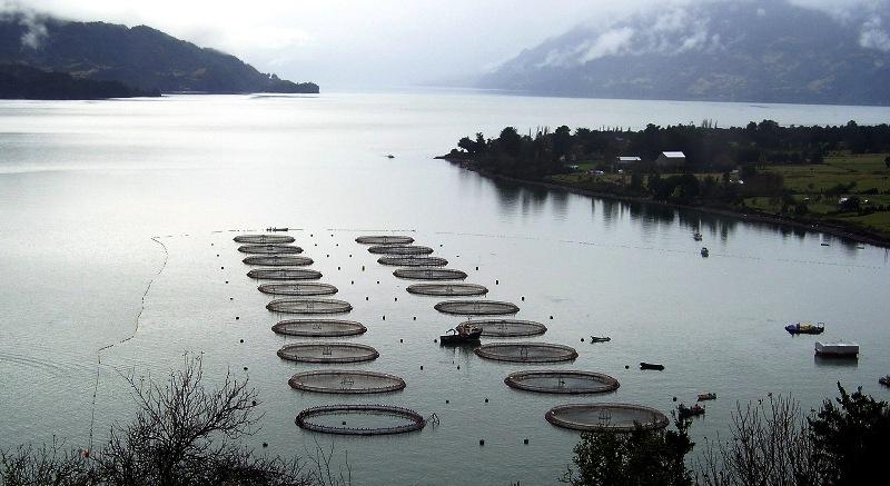 Oceana dio a conocer nuevo ranking de antibióticos en la salmonicultura