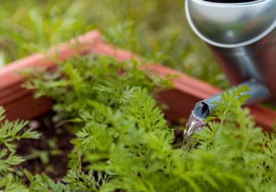 Cómo cuidar nuestro jardín en época de altas temperaturas