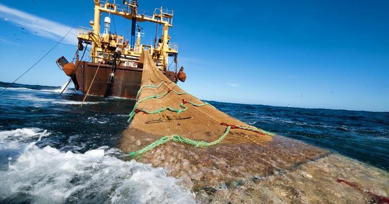 Advierten efectos negativos en Aysén si se impide pesca de arrastre fuera de la zona artesanal